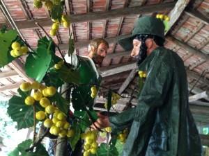 carro 2014 festa dell'uva cormons