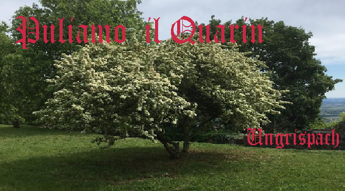 pulizie-quarin-covid